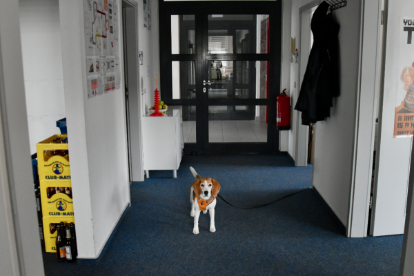 Photo ExB office dog
